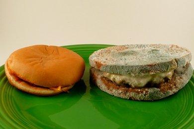 Cheeseburger take 2 day 11